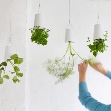 jardiniere-suspendue-renversee